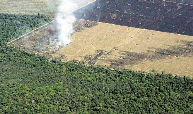 deforestacion ea