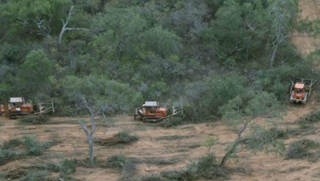 deforestación paraguay